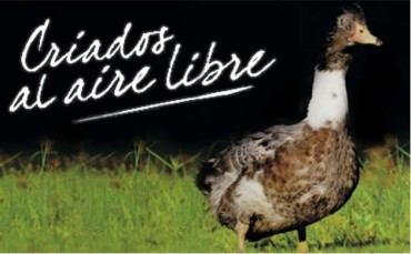 Los patos y el foie gras (parte 3ª): clasificación y caracteristicas, apuntes.
