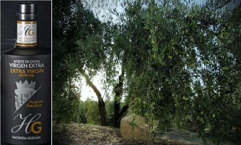 El olivo y su aceite:  «manzanilla sevillana» y su aceite «HG Reserva familiar de Hacienda Guzmán».