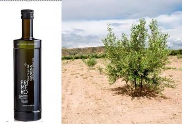 """El olivo y su aceite: royal y """"Primero, royal temprano del Castillo de Canena"""""""