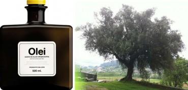 """El olivo y su aceite:  """"brava"""" de Galicia y su aceite """"Olei""""."""