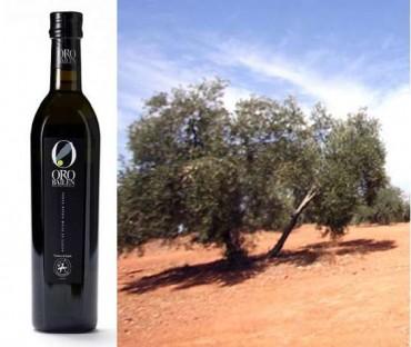El olivo y su aceite: el olivo picual y su aceite: Oro Bailén reserva familiar.