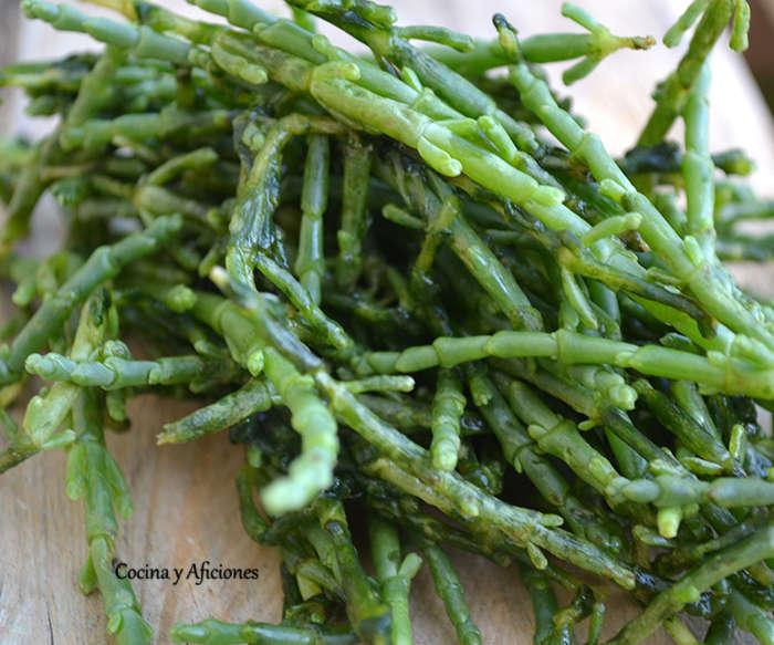 Verduras del desierto: la salicornia, apuntes.