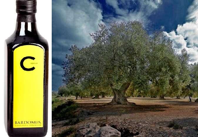 El olivo y su aceite: el olivo «canetera» y su aceite:  «C» de Bardomus.