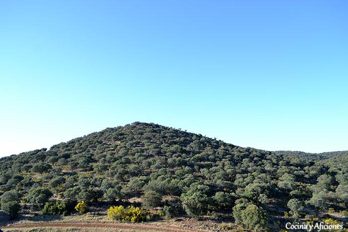 colina de olivos