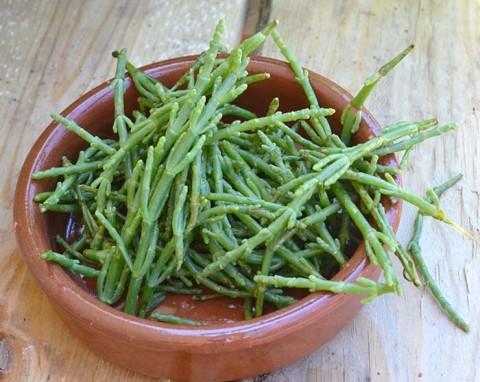 salicornia (1)