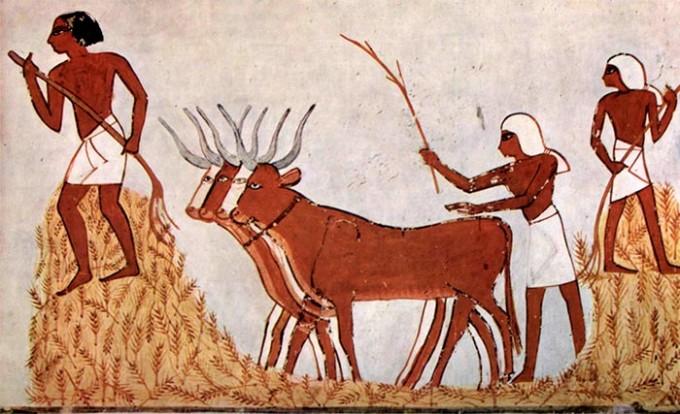 agricultores-egipcios
