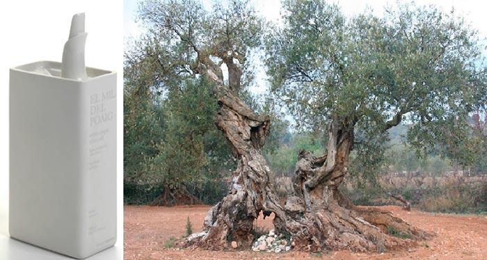 El olivo y su aceite: el olivo «farga» y su aceite: El Mil de Poaig