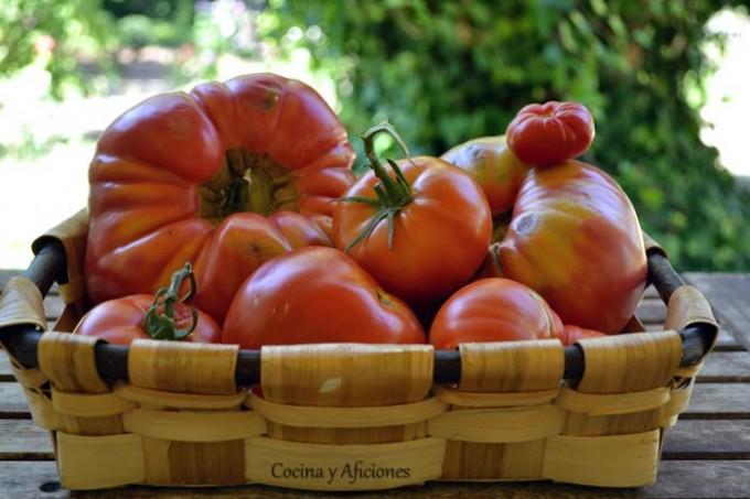 tomate--rionajo
