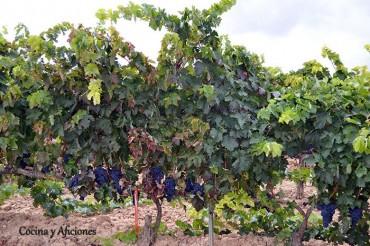 La Mancha, tierra de vinos. Apuntes.