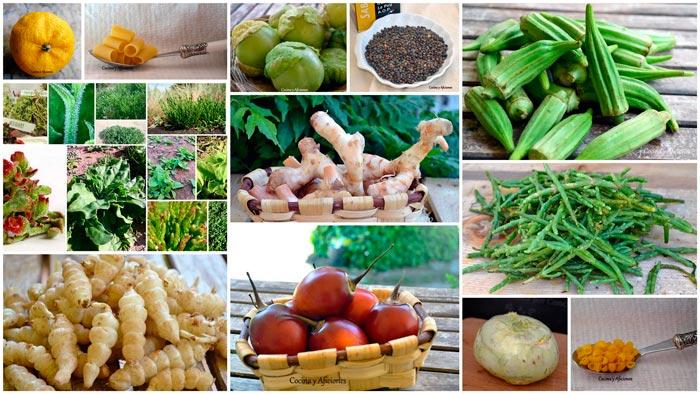 vegetales-nuevos-collage
