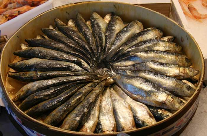 sardinas-de-cubo