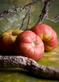 Tomate rosa del Bajo Aragón (ebroVerde), apuntes.