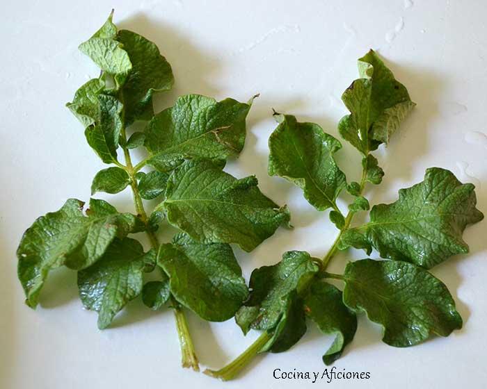 hojas-de-patata