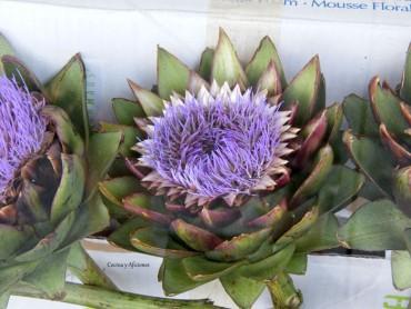 La alcachofa, historia y variedades más apreciadas I, apuntes.