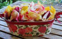 Las flores en la cocina, bases históricas de su uso. Apuntes.