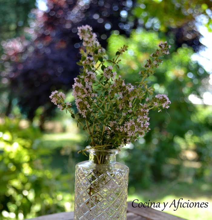 flor-de-tomillo