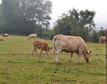 La carne: bases, tipos, cortes, conservación y recomendaciones. Apuntes