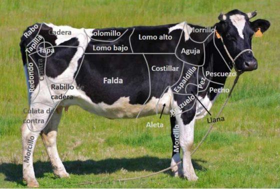 partes-de-la-vaca