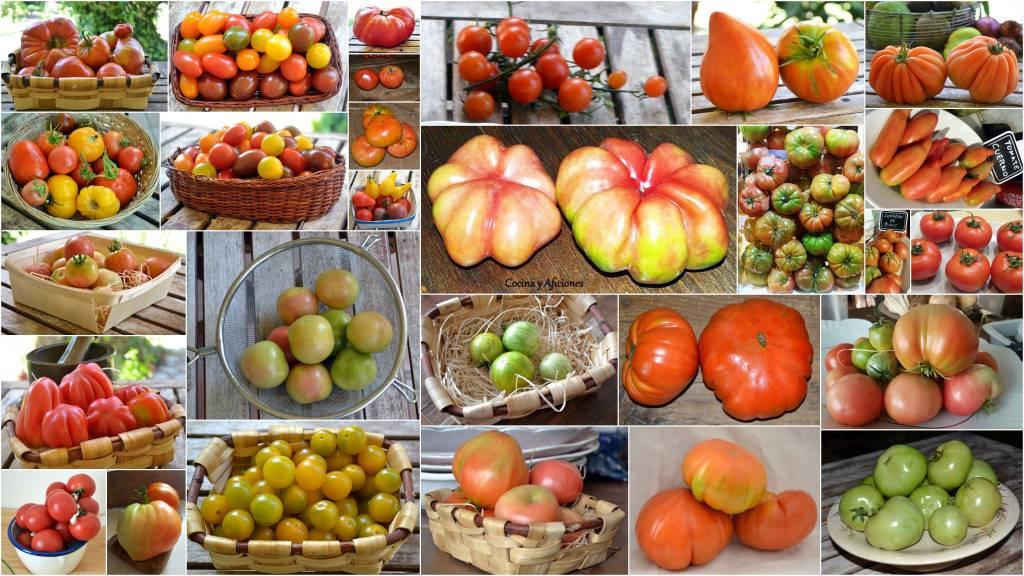 tomates-2