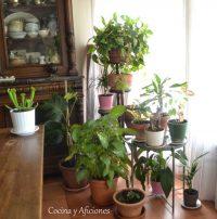 Unas cuantas razones para llenar de plantas tu vida y tu casa, apuntes.