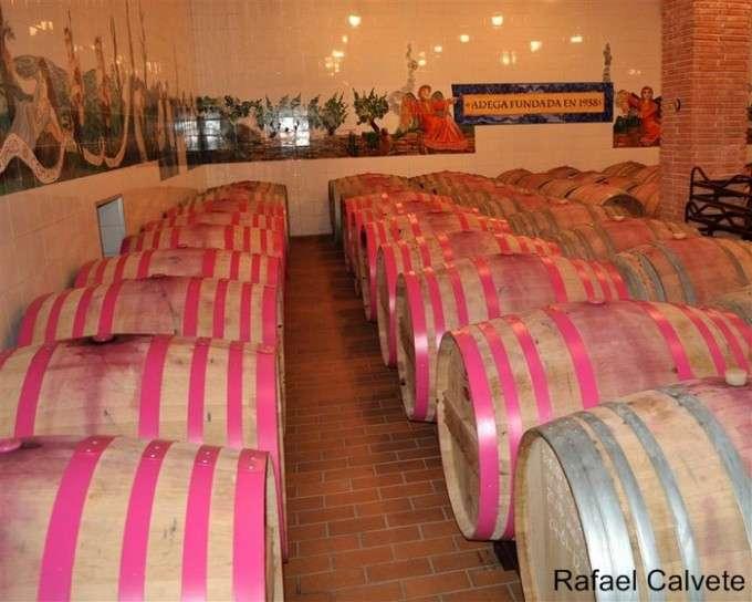 Sala con barricas de roble en la Bodega Abadía da Cova (Medium)