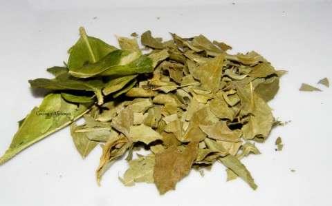 hojas de curry y de lima kaffir