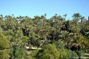palmeral
