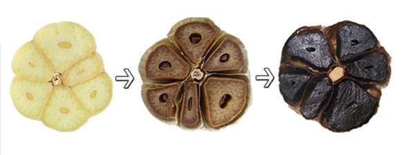 proceso del ajo negro