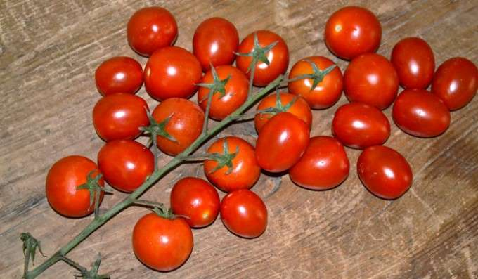 tomate (39)
